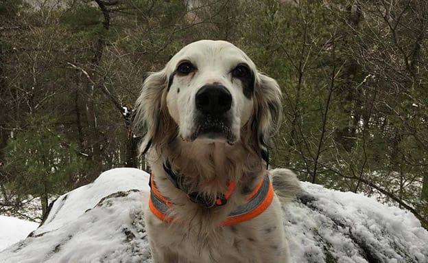 הכלב הציל את בעליו מהדב - ומת